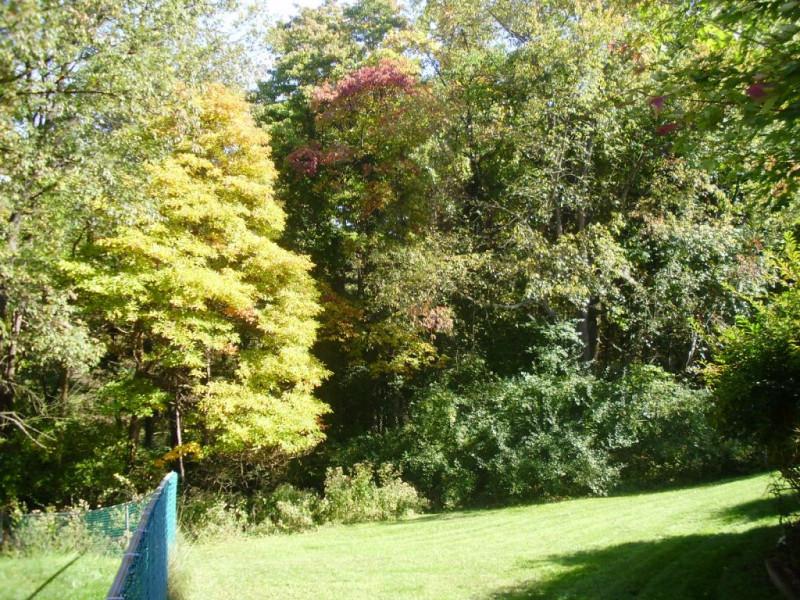 后院景色,春,夏,秋,冬 (次序有点乱了)