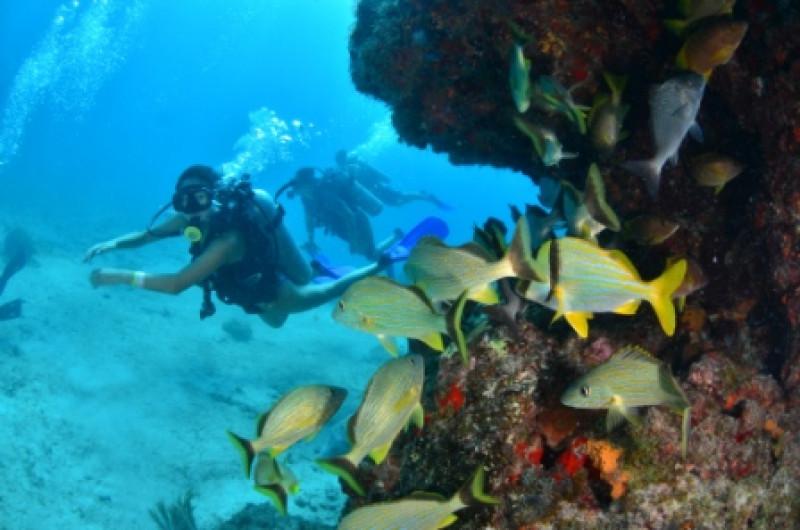 在Cancun潜水