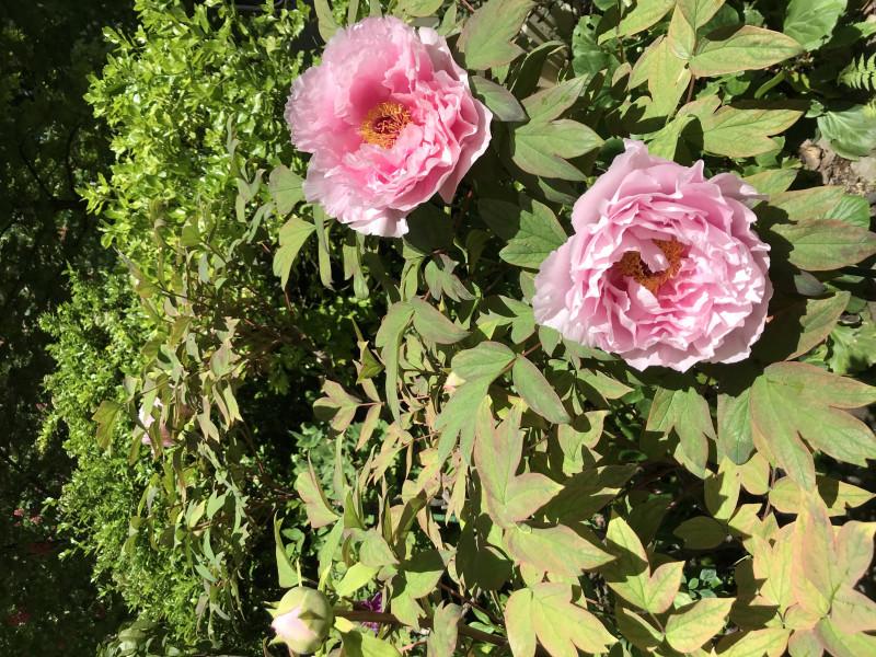 五月初的鲜花