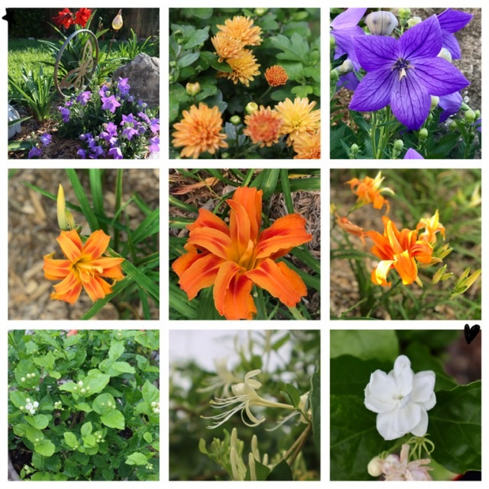 五月,园中花和工作猫
