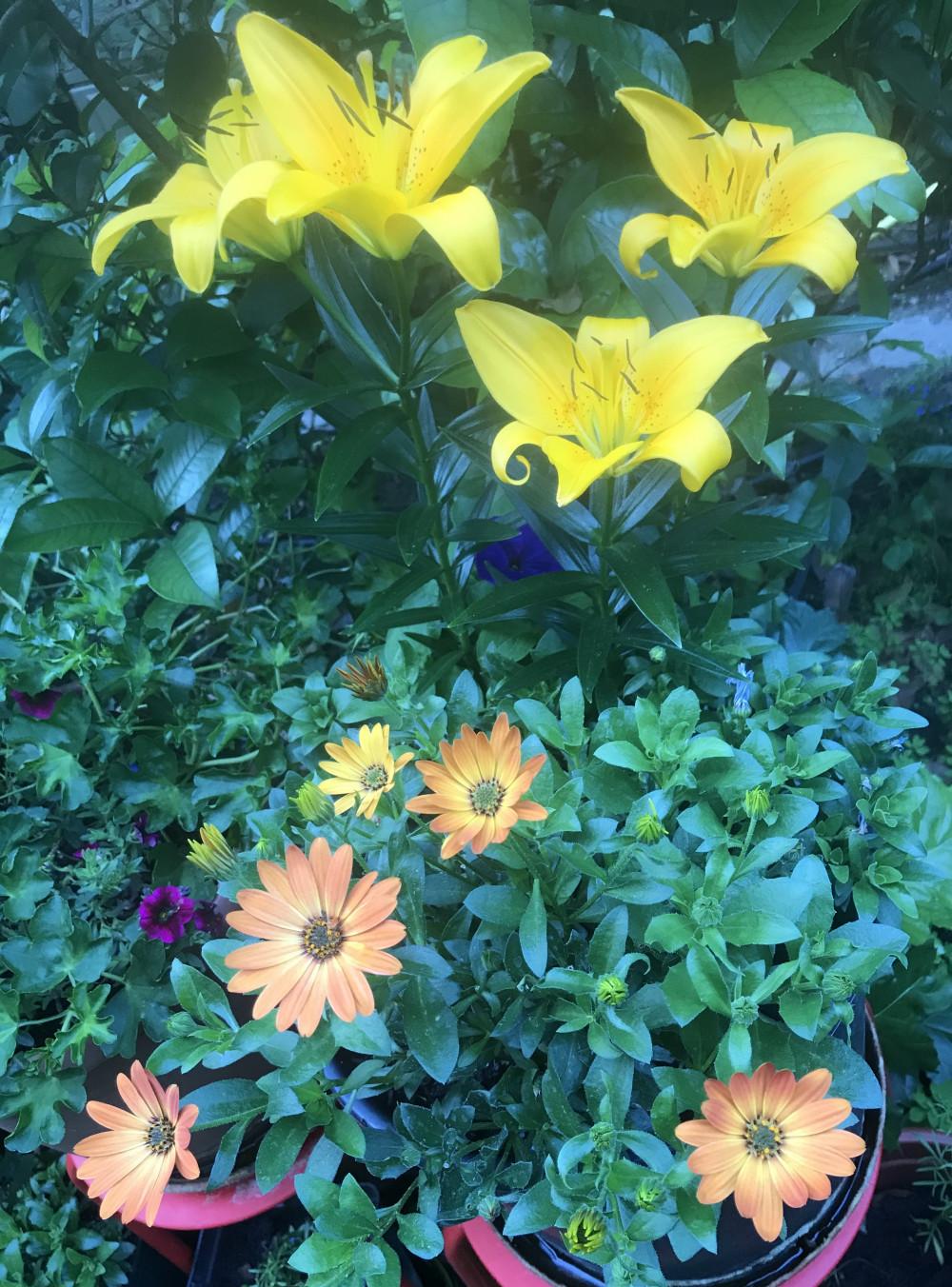 新花,祝大家周末快乐、端午快乐:)