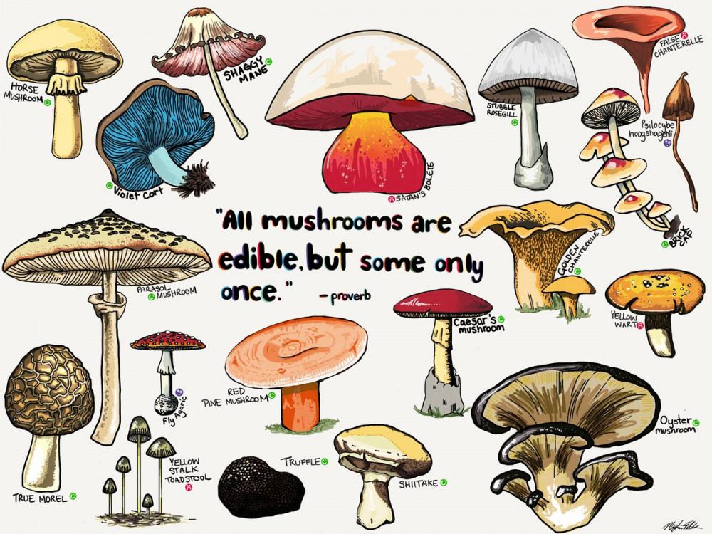 跑步偶遇 --- 生平第一次采野蘑菇